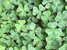 St. Patrick's Day – A Brief History