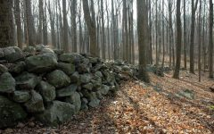 Navigation to Story: Connecticut's Stone Walls – History in Your Backyard