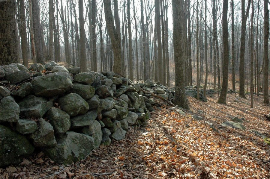 There may be as many as 100,000 miles of stones walls in New England.